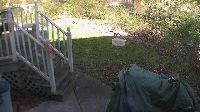 Backyard at 74